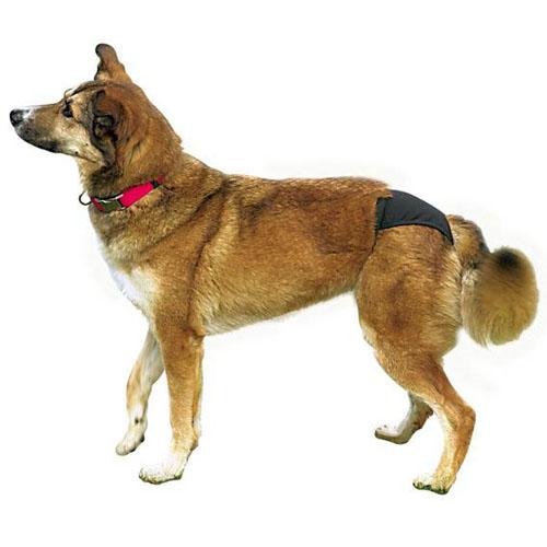 Trixie трусы Люкс для собак