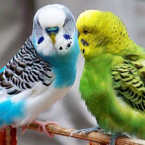 Для птиц и грызунов